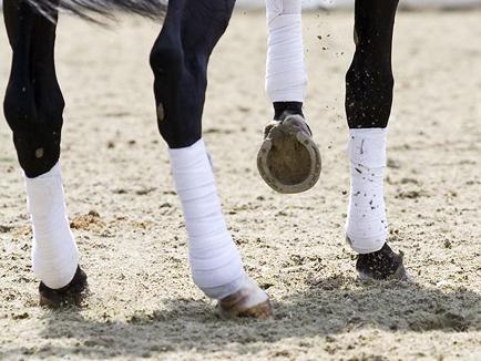 benen bandages peestemperatuur onderzoek bit