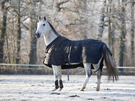 paard zweet zadel