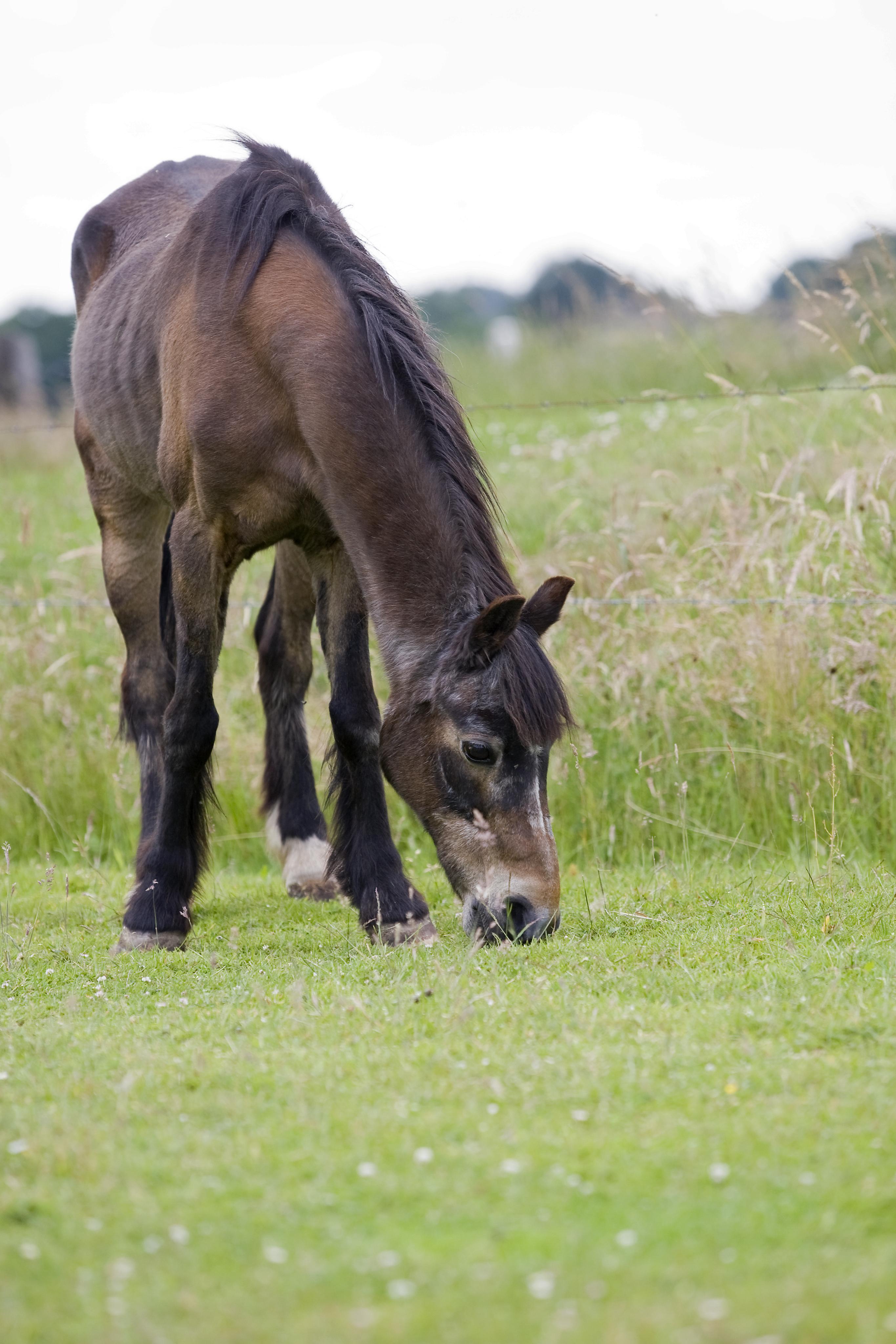 eiwitrijk voer paard