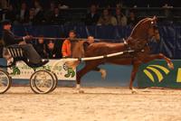 Zuidwester kampioen tuigpaard
