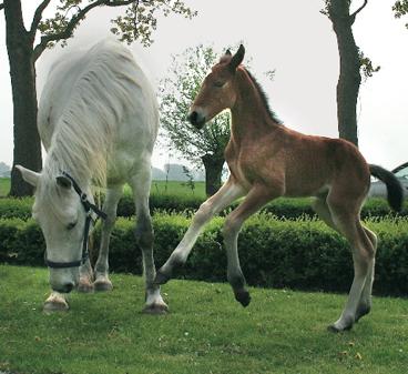 veulen freya paardendrama Marrum