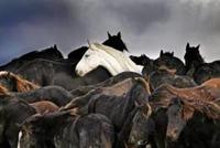 paardendrama Marrum