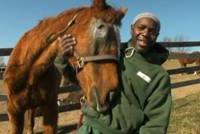 verzorging bejaarde paarden