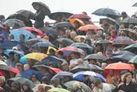 hengsten paraplu's gedrag karakteronderzoek