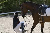 Val van paard