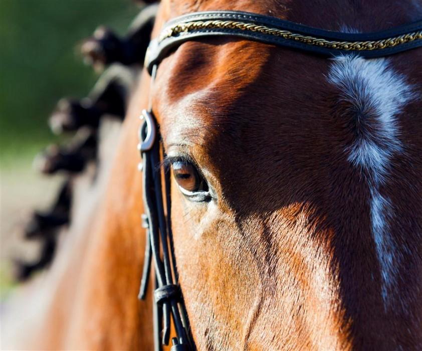 De Wilde Keuken : Documentaire de wilde keuken over paardenslacht horses