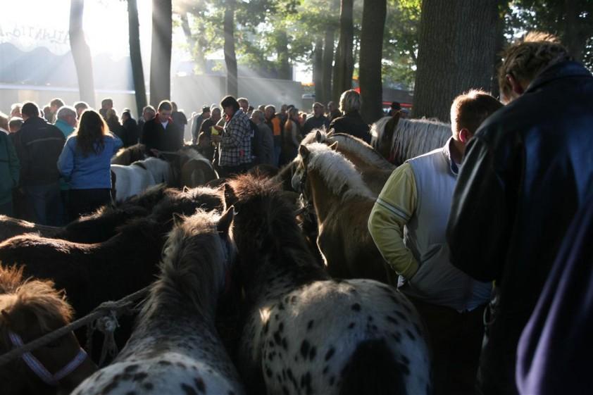 Ponymarkt