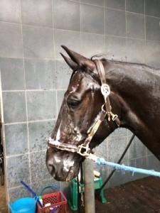 Foto 1- Glocks Undercover - Fritsie gaat in bad voor de reis naar Indoor Brabant.