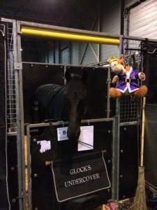 Foto 2 -Aangekomen bij Indoor Brabant. De paarden staan rustig op stal.