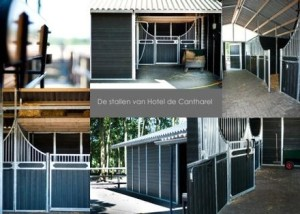 Stallen-cantharel-300x214