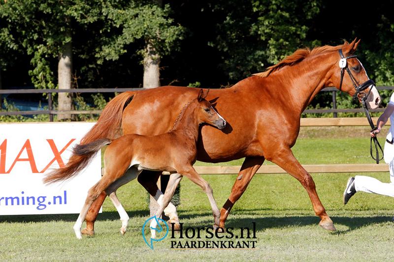 Foto: Melanie Brevink-van Dijk/Paardenkrant-Horses.nl
