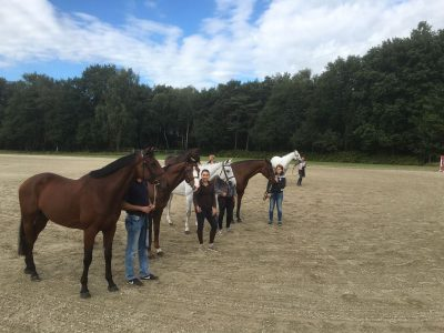 De SFN-veilingpaarden Foto: Dirk Willem Rosie