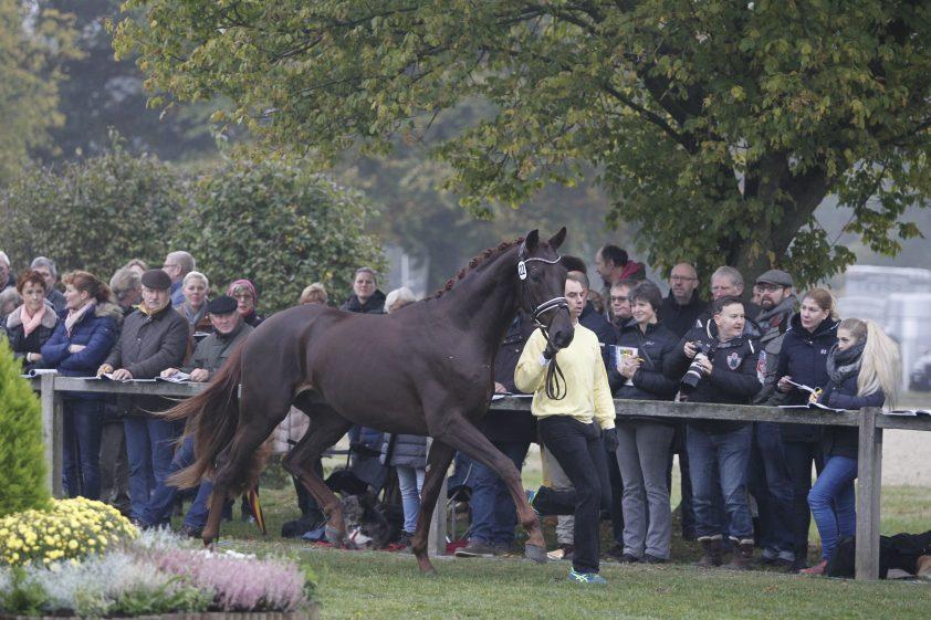 Cat.nr 22 (Dimaggio x Jazz Time x Escudo I) - Foto: Paardenkrant-Horses.nl/Rick Helmink