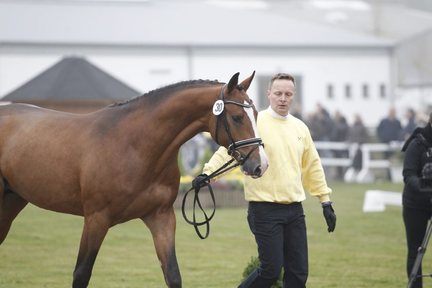 Cat.nr 30 (Cardento x Julio Mariner xx x Calypso II) - Foto: Paardenkrant-Horses.nl/Rick Helmink