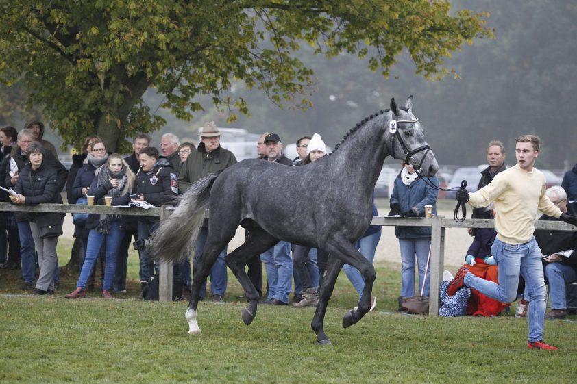 Cat.nr 44 (Diacontinus x Silvio I x Espri) - Foto: Paardenkrant-Horses.nl/Rick Helmink