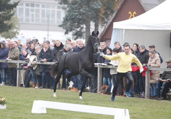 Cat.nr 68 (Funtime x Londonderry x Weltmeyer)