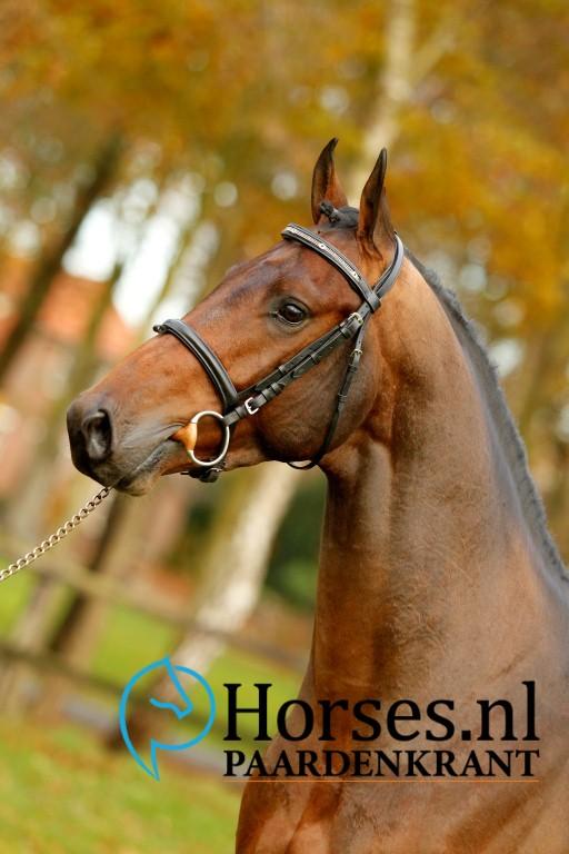 Cat.nr.10: Ilon (Toulon x Indoctro). Foto: Paardenkrant-Horses.nl/Melanie Brevink