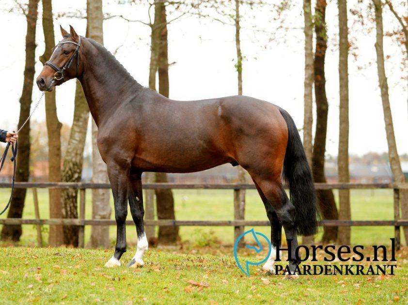Cat.nr.14: I Am Casago II (Casall x Carthago). Foto: Paardenkrant-Horses.nl/Melanie Brevink