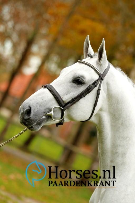 Cat.nr.21: Milton Z (Mylord Carthago x Sandro Boy). Foto: Paardenkrant-Horses.nl/Melanie Brevink