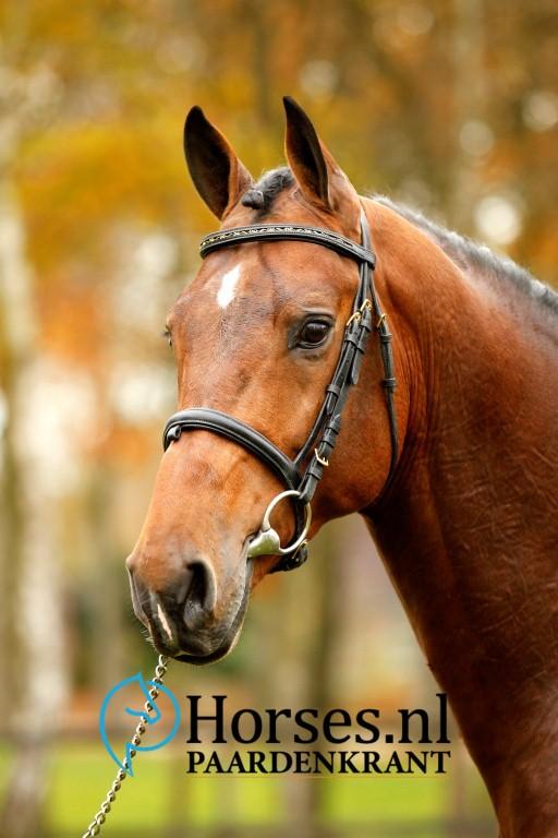 Cat.nr.22: Tallmann TN (Toulon x Colman). Foto: Paardenkrant-Horses.nl/Melanie Brevink