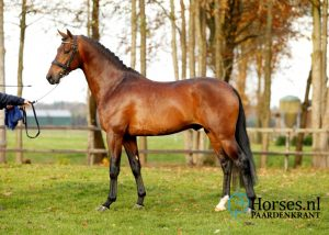 Cat.nr.36: Iverniss (Everdale x Johnson). Foto: Paardenkrant-Horses.nl/Melanie Brevink