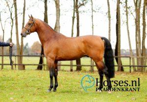 Cat.nr.5: Idextro (Dexter R x Indoctro). Foto: Paardenkrant-Horses.nl/Melanie Brevink