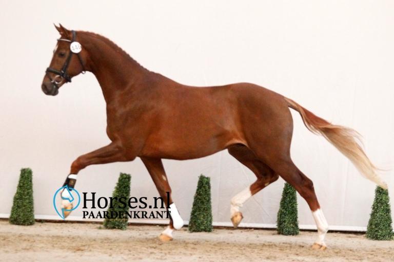 446-everdale-x-vivaldi-gefokt-door-a-dijkstra-en-geregistreerd-bij-van-olst-horses-2-1