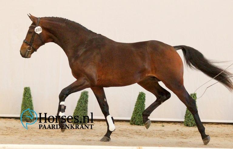 498florestan-i-x-furst-piccolo-gefokt-door-stoeterij-het-maalwater-en-mede-geregistreerd-bij-paardensportcentrum-de-dalhoeve-1