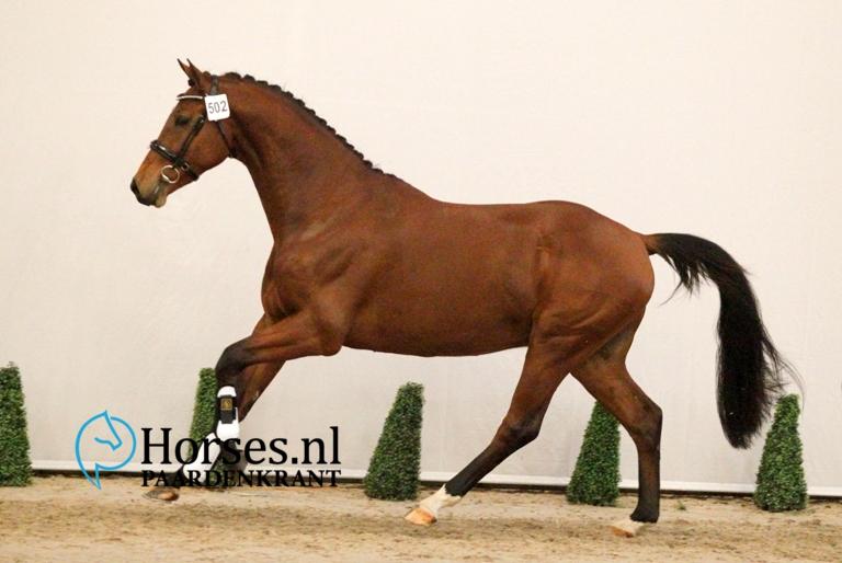 502-foreign-affair-x-goodwill-gefokt-door-en-geregistreerd-bij-roos-stables-1