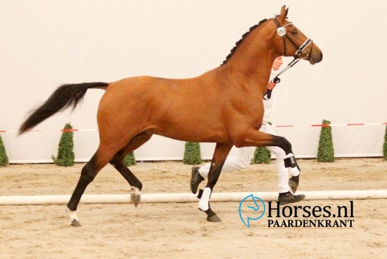 593-vitalis-x-ampere-gefokt-door-reesink-horses-en-mede-geregistreerd-bij-andreas-helgstrand-1