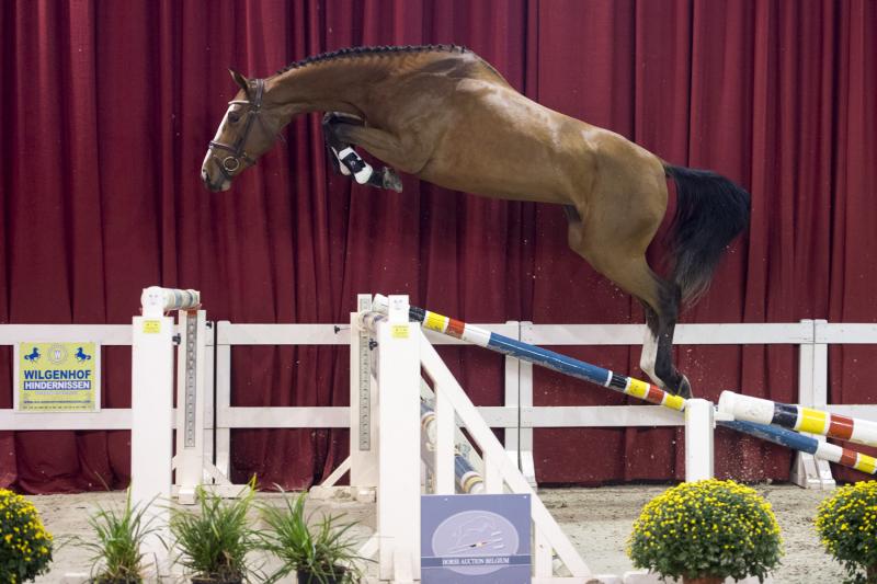 Intens Royal Z, Inshallah de Muze, Horse Auction Belgium, Michel Spaas