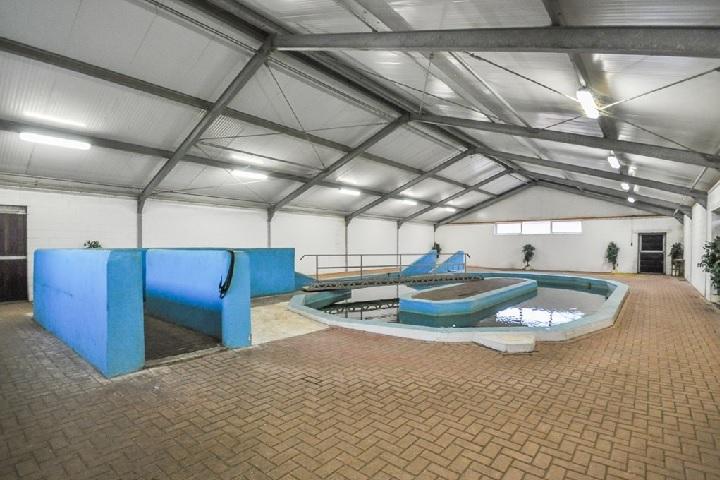 Uniek paardenbedrijf met paardenzwembad (Te koop)