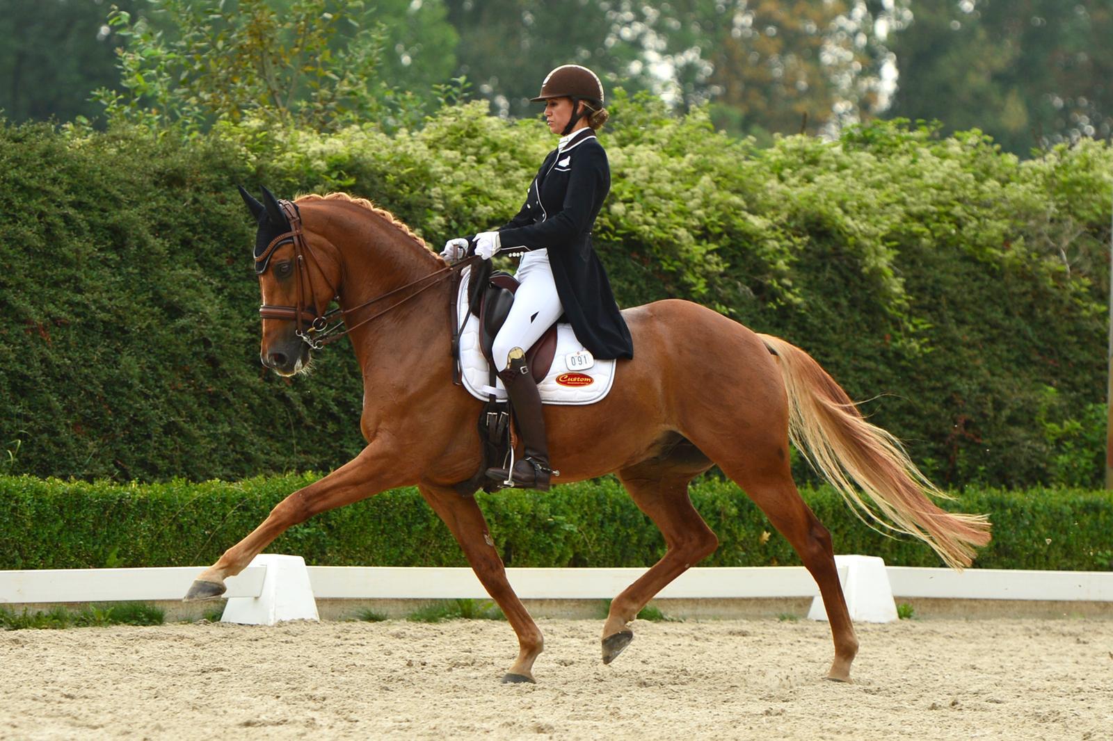 Engie Kwakkel naar dik 75%: 'Echt elke pas was van mij' - Horses.nl - Horses.nl