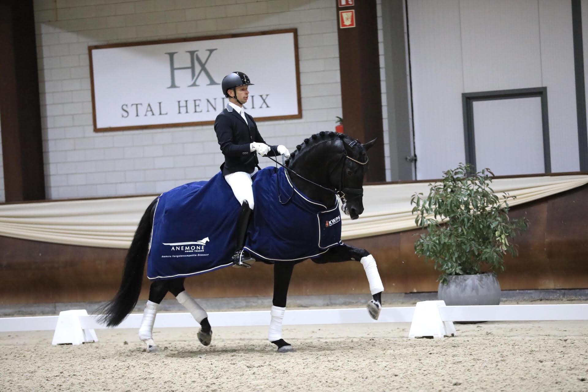 Imposantos maakt favorietenrol waar in Anemone Hengstencompetitie Kronenberg - Horses.nl