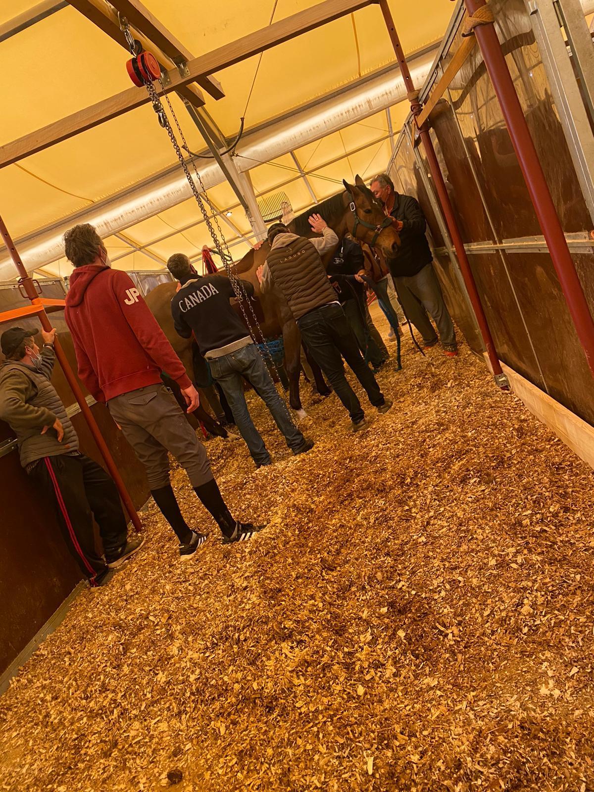 FEI komt met Valencia-update: 6 paarden gestorven; volgens betrokkenen 10 - Horses.nl